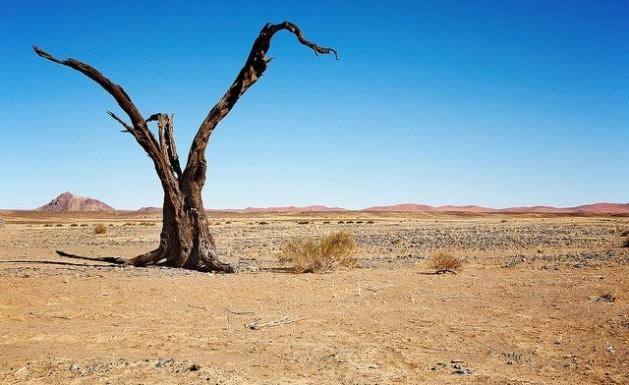 تدهور ملياري هكتار من الأراضي بمعدلات حادة نتيجة التصحر. Credit: Bigstock/IPS